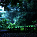 写真: Shine of rain in the woods