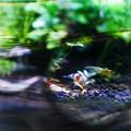 写真: 水槽観察用虫眼鏡