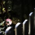 Photos: 置かれた場所で咲きなさい