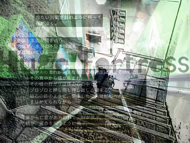 AVE写真illus.詩N1402 1507-2 No.17