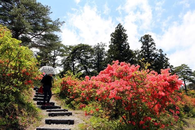 ツツジの森入口階段