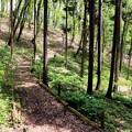 山野草散策路