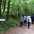 吐龍の滝遊歩道を行く見物客