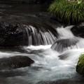 写真: 渓谷流