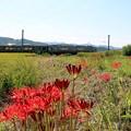 写真: 田園を電車が走る