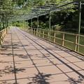 日本庭園に続く藤棚