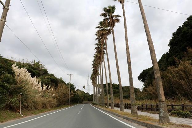 南国ムードヤシの並木