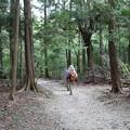 写真: 自然歩道を行くハイカー
