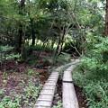 湿原入口木道