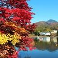 Photos: 紅葉と蓼科山