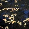 池に浮かぶ落葉