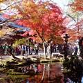 Photos: 本丸池