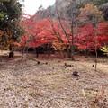 写真: 湯谷園地公園