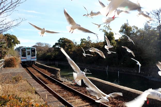 Photos: 電車を見送るユリカモメ