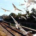写真: 電車を見送るユリカモメ