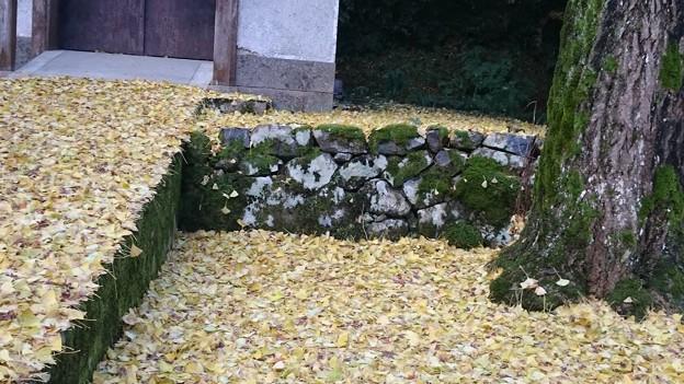 落葉と石垣の苔