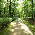 写真: 妖精散歩