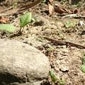 写真: 新芽と来訪者