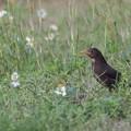 写真: Black Bird
