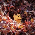 写真: 落ち葉にゃんぼ~