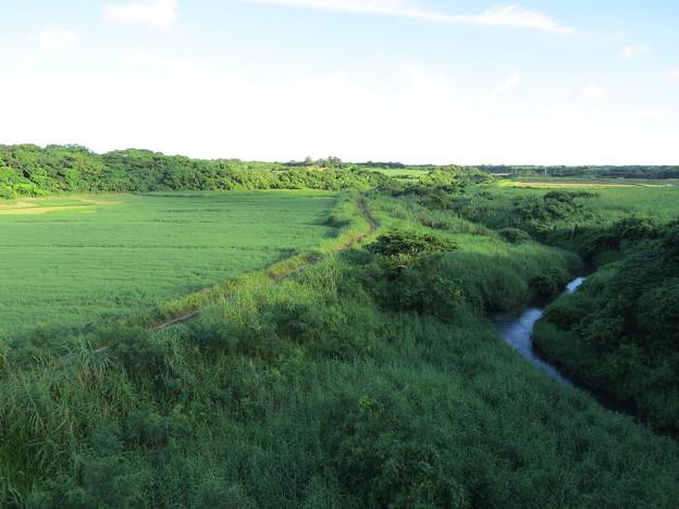 小川と小道
