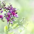 写真: *萩の花*