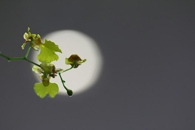 写真: 私だけのお月さん~~