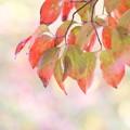 写真: 秋色(4)