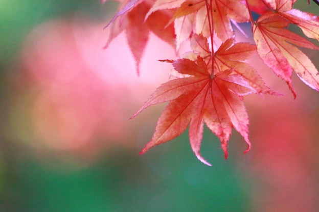 写真: 秋色(5)