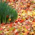 落ち葉とスイセン