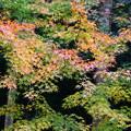 写真: 秋色(10)