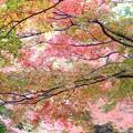 写真: 秋は錦~~