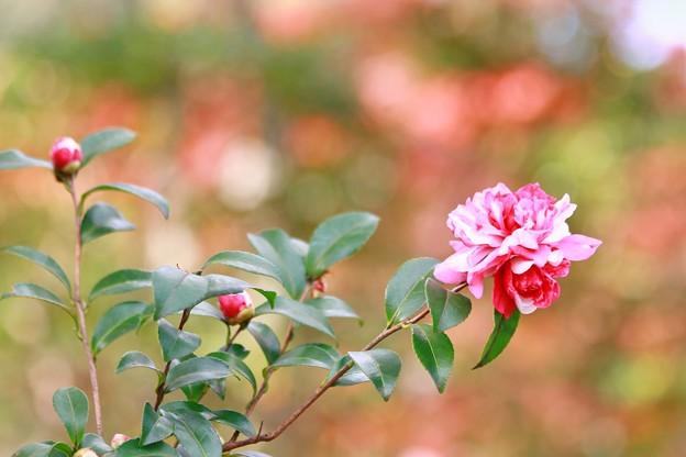 写真: 冬のハナ(2)