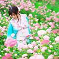 Photos: 紫陽花・和