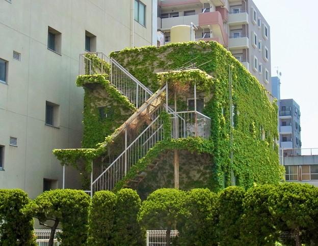 写真: 緑の館