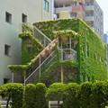 Photos: 緑の館