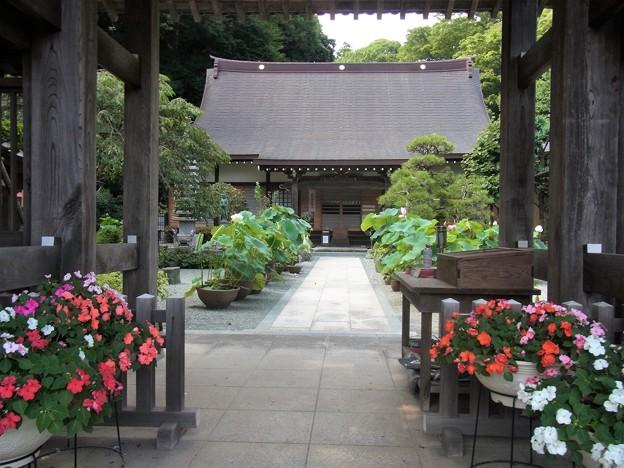 蓮のある寺院