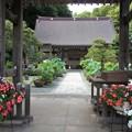 写真: 蓮のある寺院