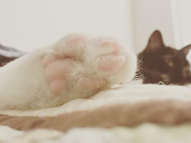 Momoちゃんの足(o^^o)