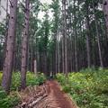 写真: 国有森林