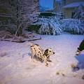 Photos: Happy dog♪
