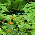 写真: ドイステープの蝶 IMGP124853_R