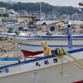 写真: 港猫