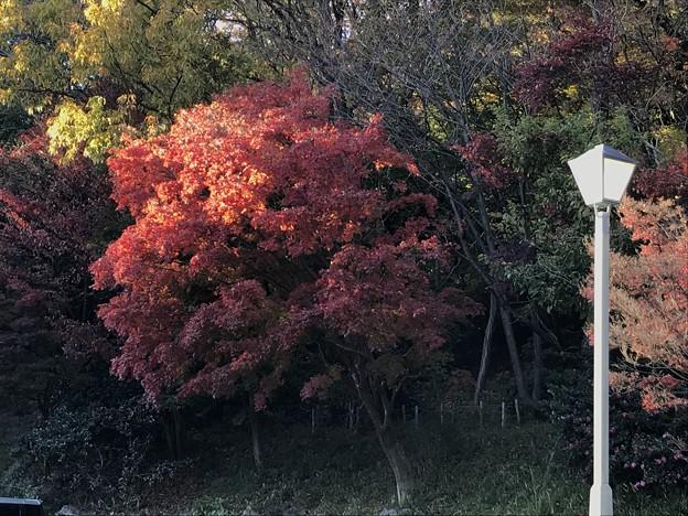 みかも山の紅葉(南口)