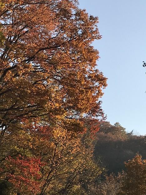 みかも山の紅葉(西斜面)