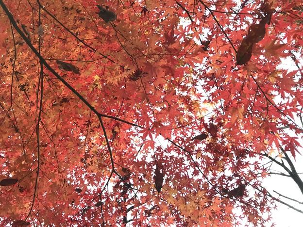 みかも山の紅葉(南斜面)