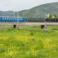Photos: JR北陸本線 高月~河毛
