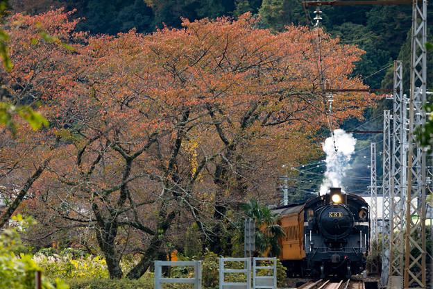 大井川鐵道 大和田~家山