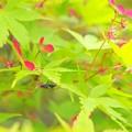 紅葉の種と山蟻さん