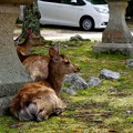 写真: 永久不滅に鹿